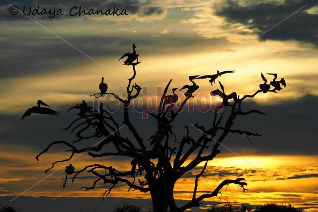 Crane silhouette, Sri Lanka - Read Photos