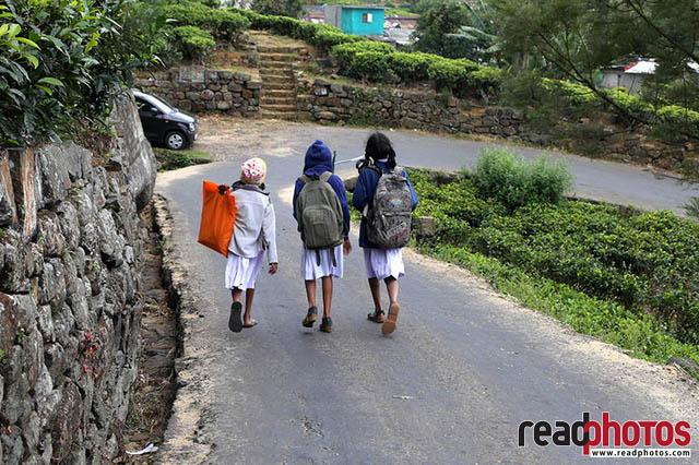Kids upcountry Sri Lanka 9 - Read Photos
