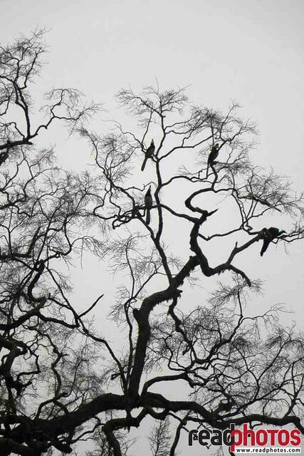 Silhouette tree with birds, Sri Lanka