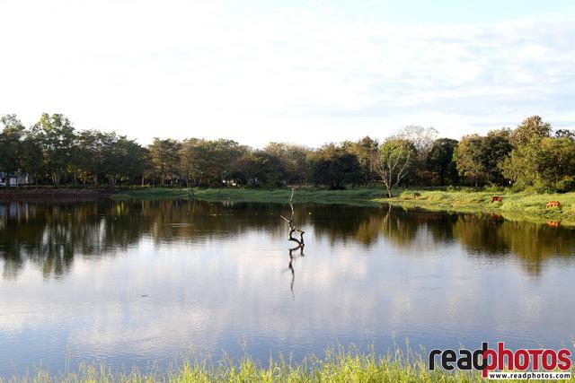 Lake in Anuradhapura, Sri Lanka - Read Photos