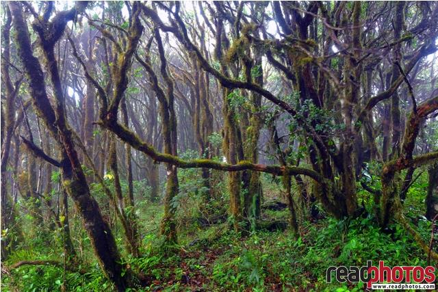 Trees in a wet forest, Sri Lanka