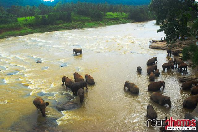 Elephants bathing, Sri Lanka - Read Photos