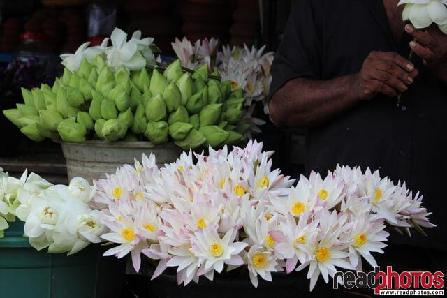 Flowers to sell, Sri Lanka