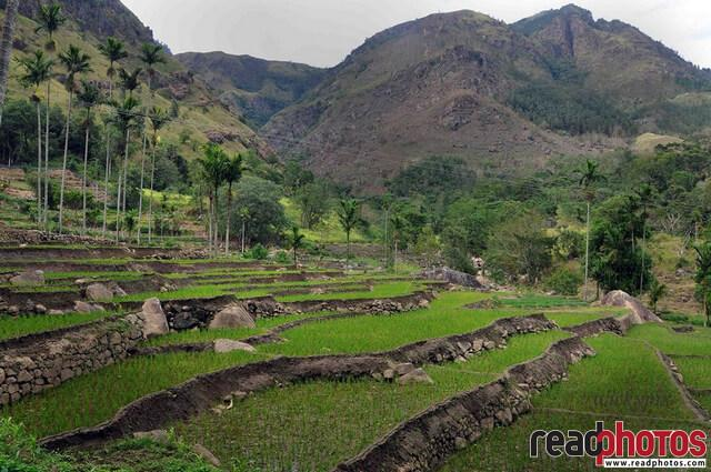 Central province paddy fields under a mountain, Sri Lanka - Read Photos