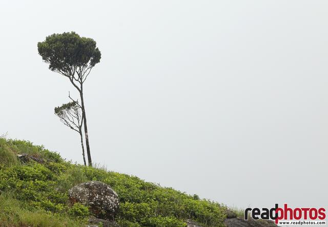 Lonely tree, Sri Lanka