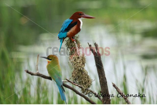Two birds, Sri Lanka - Read Photos