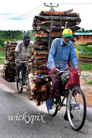 Firewood sellers, Batticalow ,Sri Lanka - Read Photos