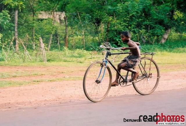 Kid riding a big bicycle, Sri Lanla - Read Photos