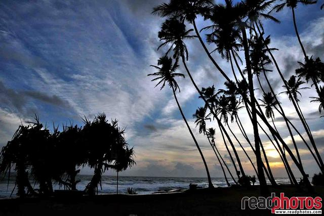 Evening on a beach, Sri Lanka - Read Photos