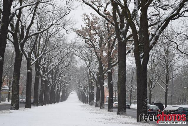 Berlin trees, Cold December, Germany - Read Photos