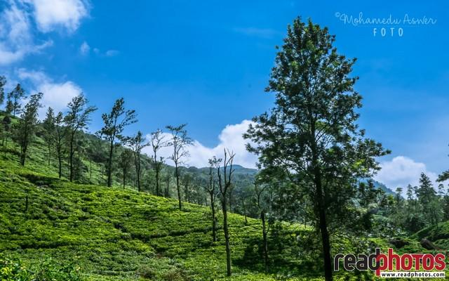 Up country, Sri Lanka - Read Photos