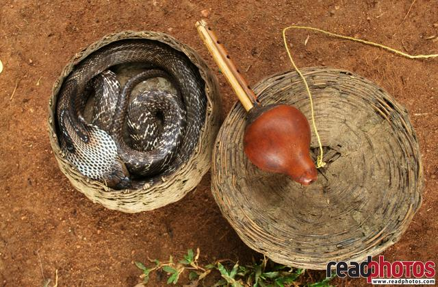 Snake and a flute, in Sri Lanka