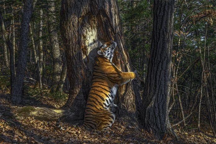 Wildlife Photo Awards - award winning photographs - BBC