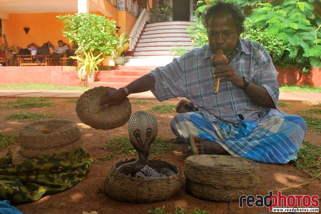 Snake Dancing, Anuradhapura, Sri Lanka - Read Photos