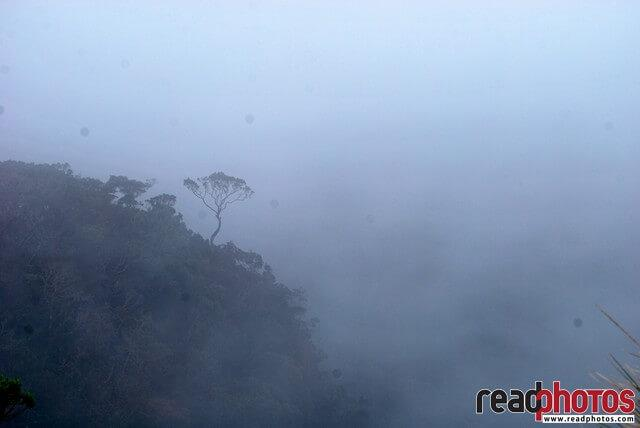 Misty weather, lonely tree, Sri Lanka