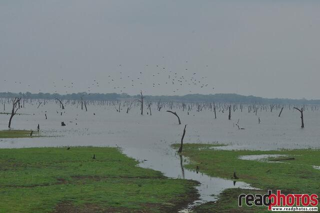 Old lake view, Sri Lanka - Read Photos