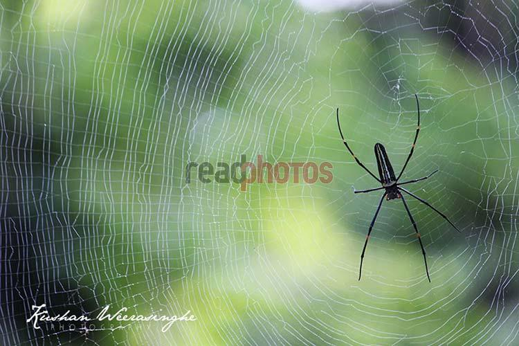 Spider Web - Read Photos