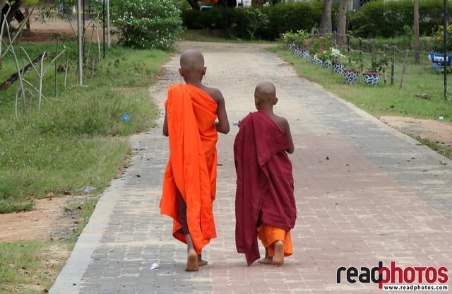 Little monks walking forward, Dabulla, Sri Lanka