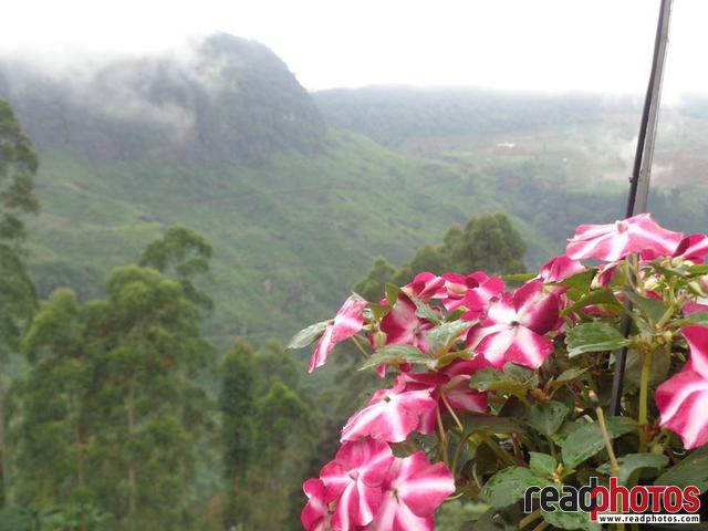 Red & white flowers, Sri Lanka - Read Photos