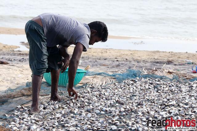 Dry fish laborer, Sri Lanka  - Read Photos