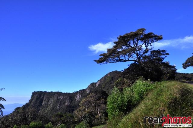 Trees, a mountain and the Sky - Read Photos
