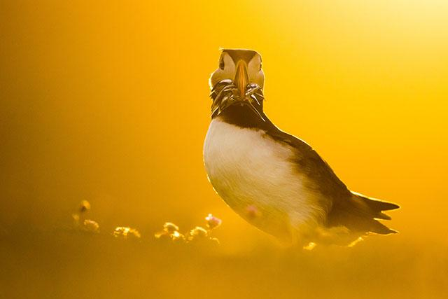 Bird Photographer of the Year 2021 winners - IMAGING RESOURCE