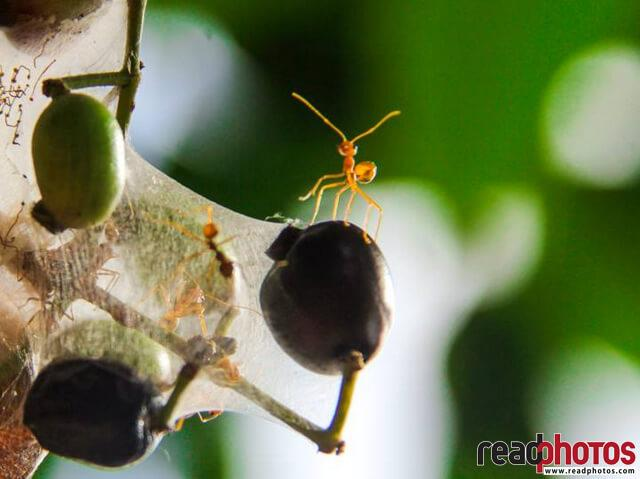 Cobwebs, Ants and seeds, Sri Lanka - Read Photos