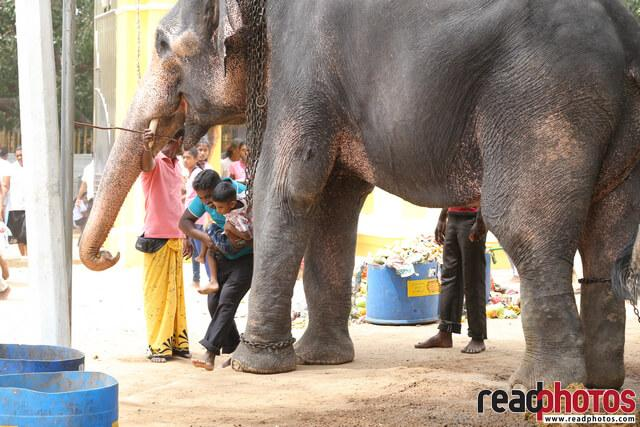 A man with a child taking blessings from an elephant, Sri Lanka