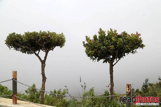 Misty upcountry Sri Lanka