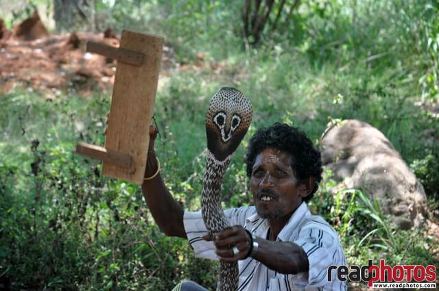 Gypsy playing with a Snake, Sri Lanka - Read Photos