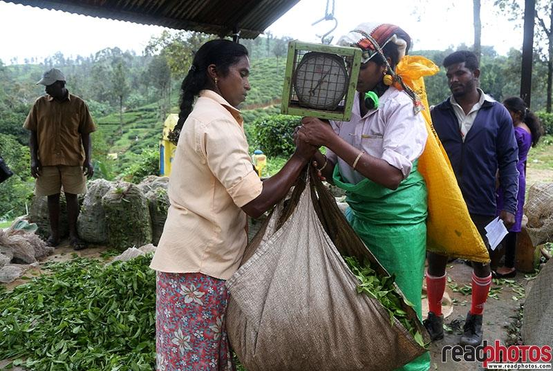 Tea Selling - Read Photos