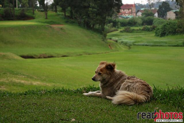 Pet dog in a play ground in Nuwara eliya, Sri Lanka - Read Photos