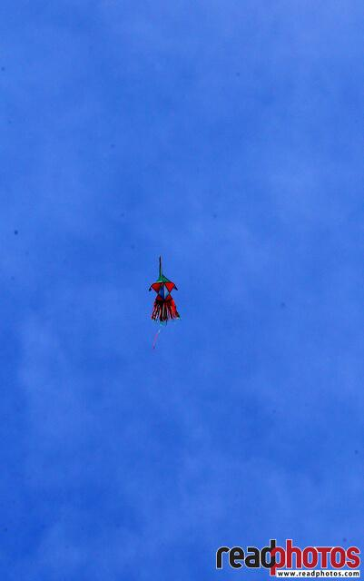 Lonely kite in the sky, Sri Lanka - Read Photos