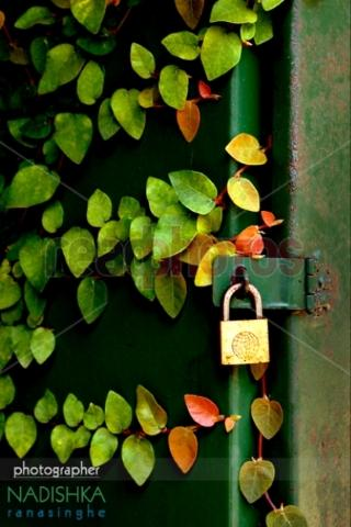Locked - Read Photos