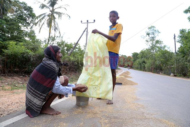 Father and son working, Sri Lanka - Read Photos