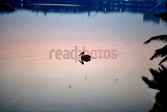Reflection, Sri Lankan lake - Read Photos