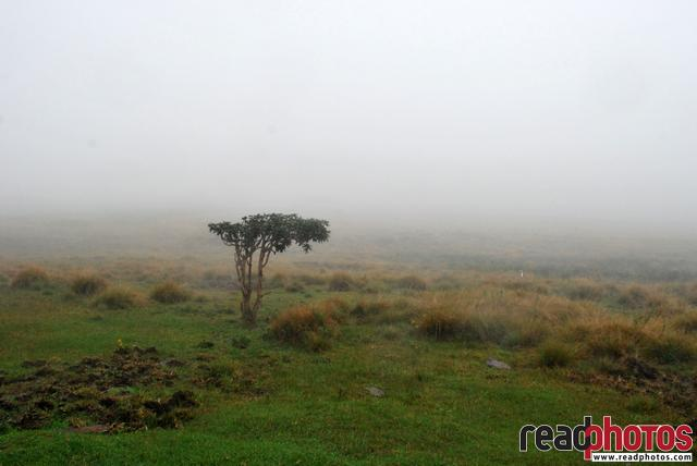 Mist, Horton place, Nuwara eliya, Sri Lanka - Read Photos