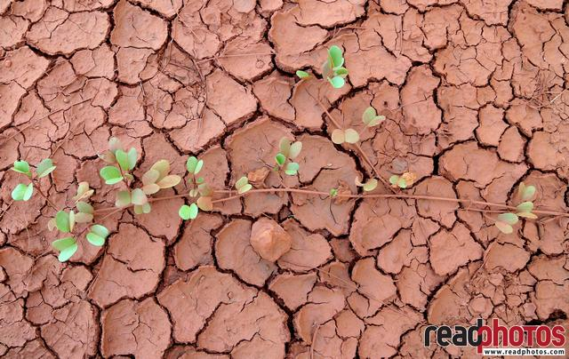 Drought in Sri Lanka - Read Photos