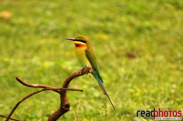 Sri Lankan lone bird  - Read Photos