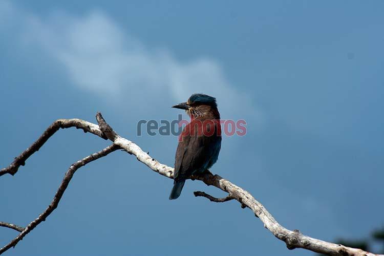 Birds of Sri Lanka - Read Photos