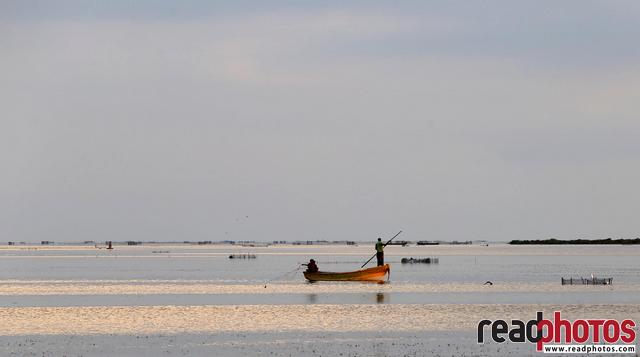 Jaffna lagoon, Sri Lanka