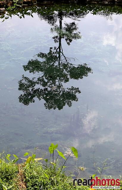Reflected tree, Lake in Sri Lanka  - Read Photos