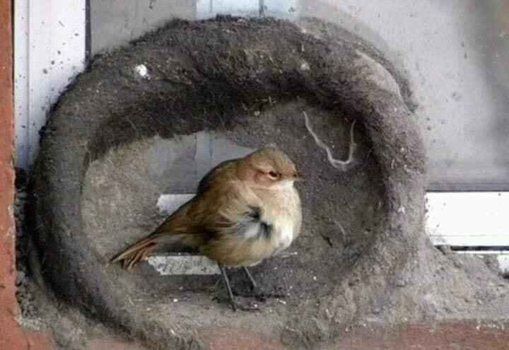 Tremendous efforts of the birds