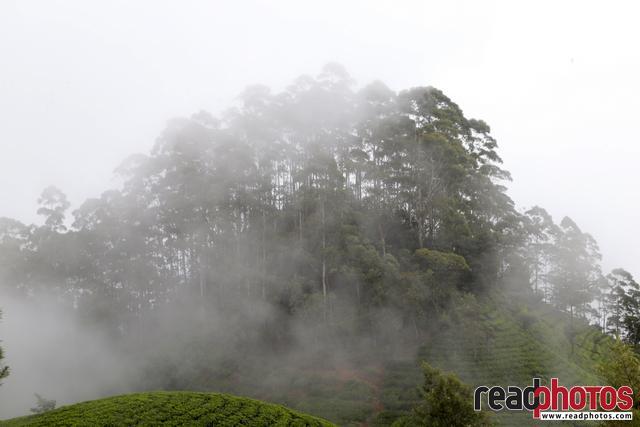 Mist in Lipton, Nuwara Eliya, Sri Lanka