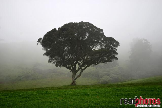 lonely tree, Horton place, Sri Lanka - Read Photos