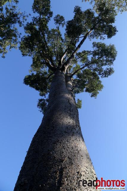 Tree and the sky, Nuwara Eliya, Sri Lanka - Read Photos
