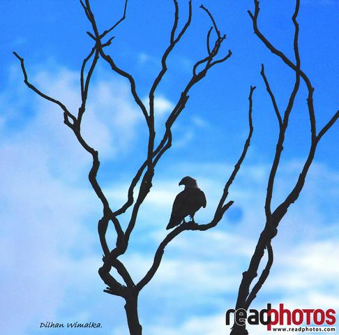 Eagle and the blue sky