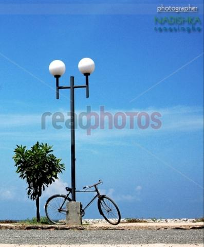 Street lamps,cycle, tree and the sky