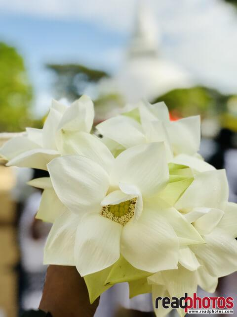 White Lotus, Katharagama - Read Photos
