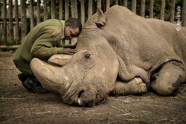 Wildlife Photographer of the Year - Shortlisted photos